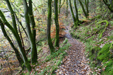 Brundholme Woods in Autumn  Keswick  Cumbria  England  United Kingdom  Europe