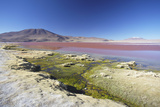 Laguna Colorada on the Altiplano  Potosi Department  Bolivia  South America