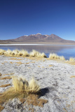 Landscape of Laguna Canapa on Altiplano  Potosi Department  Bolivia  South America