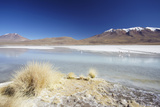 Laguna Adeyonda on Altiplano  Potosi Department  Bolivia  South America