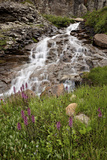 Cascades and Elephant Heads  San Juan Nat'l Forest  Colorado  USA