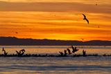 Sunrise  Isla Rasa  Gulf of California (Sea of Cortez)  Baja California  Mexico  North America