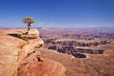 Grand View Point Overlook and Juniper Tree  Island in the Sky  Canyonlands National Park  Utah  USA