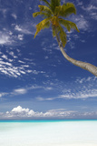 Palm Tree Overhanging Beach  Maldives  Indian Ocean  Asia