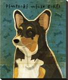 Pembroke Welsh Corgi (Tri-Color)