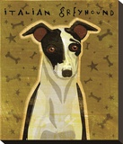 Italian Greyhound (Black & White)