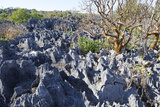 Tsingy de Bemaraha Strict Nature Reserve  UNESCO Site  Melaky Region  Madagascar