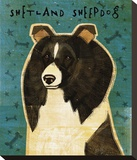 Shetland Sheepdog (Black & White)