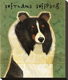 Shetland Sheepdog (Tri-Color)