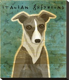 Italian Greyhound (White & Grey)