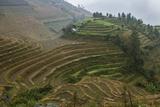 Rice Terraces  Longji  Guangxi  China  Asia