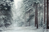 Forest Snow