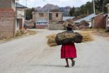 An Aymara Indian Woman Carrying a Bundle of Straw