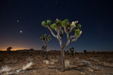 Stars over Joshua Trees in the Desert