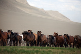 A Herd of Horses on the Mongolian Steppe