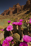 Prickly Pear Cacti and Rafters on the Colorado River
