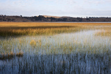 Reeds in Lake Titicaca at Sunrise