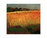 Corn Field Near Carantec