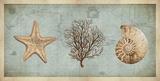 Trésors de mer II Reproduction d'art par Deborah Devellier