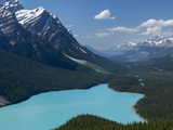Bright Turquoise Colored Peyto Lake from the Bow Summit in Banff National Park  Canada