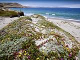 Santa Rosa Island  Channel Islands National Park  California Wildflowers