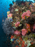 Profusion of Marine Life Shot in Indonesia