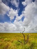 Mad Island Marsh Preserve  Texas: Landscape of the Marsh's Coastal Plains Near Sunset