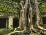 The Ta Prohm Temple Located at Angkor in Cambodia