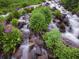 A Mountain Stream Within the Indian Peaks Wilderness Area Near Rocky Mountain National Park  Co