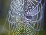Spiderwebs  Alaska