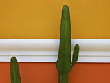 Cacti Against Yellow and Orange Painted Wall