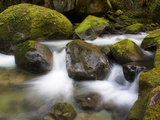 Flowing Creek Water Among Mossy Rocks Near the Base of Elk Creek Falls and the Coquille River