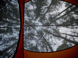 View from Inside Tent Looking Up into the Trees  White River  Arkansas