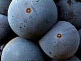 Healdsberg  Sonoma County  California  Vineyards