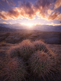 Barrel Cactus in the Alabama Hills at Sunset