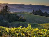 Healdsberg, Sonoma County, California: Vineyard and Winery at Sunset. Papier Photo par Ian Shive