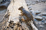 Squirrel - Canyon Overlook - Zion National Park - Utah - United States
