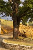 Dawn at Gated Entrance to Farm Near Greoux-Les-Bains  Provence  France