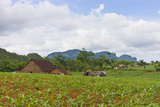 Limestone Hill  Farmland  Tobacco Drying House  Vinales Valley  Cuba