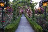 Rose Garden at Butchard Gardens in Full Bloom  Victoria  British Columbia  Canada