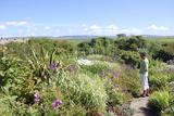 Kierfiold House Gardens  Sandwick  Orkney Islands
