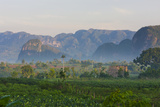 Limestone Hill  Farmland  Vinales Valley  UNESCO World Heritage Site  Cuba