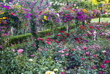 Rose Garden at Butchard Gardens in Full Bloom  Victoria  British Columbia  Canada