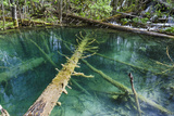 The Upper Lakes  Small Ponds  Plitvice Lakes  Plitvicka Jezera  Croatia