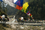 Mule Train on Trail to Namche Bazaar  Larja Bridge  Khumbu  Nepal