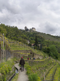 Walking Path  Tirol Castle  Merans  South Tyrol  Italy
