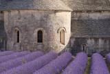 Rows of Lavender  Abbaye De Senanque  Gordes  Luberon  Provence  France