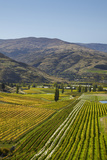 Felton Road Vineyard  Autumn  Bannockburn  Central Otago  South Island  New Zealand