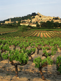 View of Provence Vineyard  Luberon  Bonnieux  Vaucluse  France