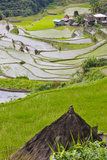 Straw Hut and Rice Terraces  Philippine Cordilleras  Banaue  Philippines
